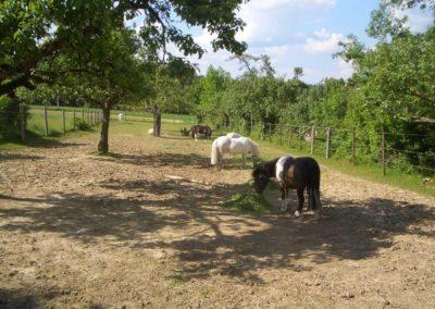 Ponys Reitstall Haghof