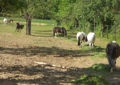 Ponyweide